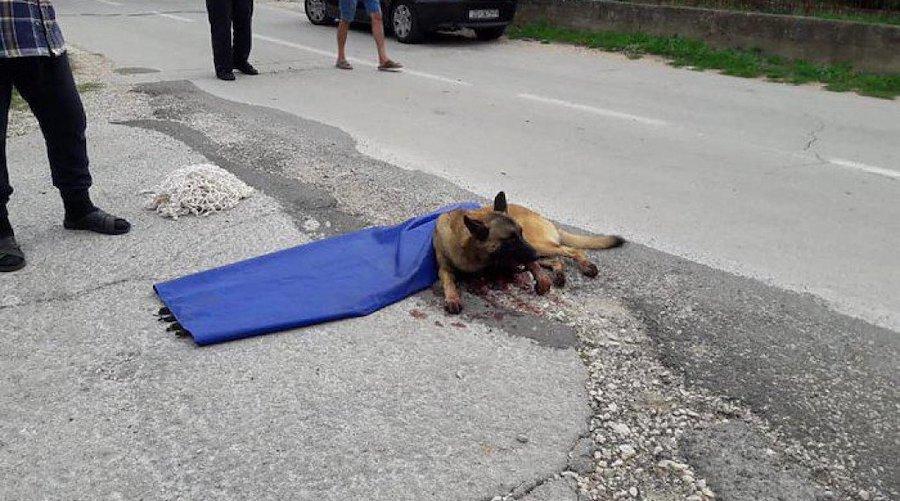 Policija privela osobu koja se povezuje s mučenjem životinja u Biogradu gdje je pronađen pas upucan sačmaricom